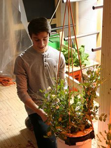 picture of student tending to a vegetable plant grown using hydroponics method
